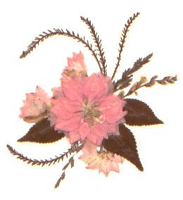 Pinkcurve