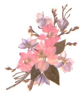 Pink spray of pressed flowers