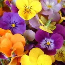 How to preserve the color in pressed flowers